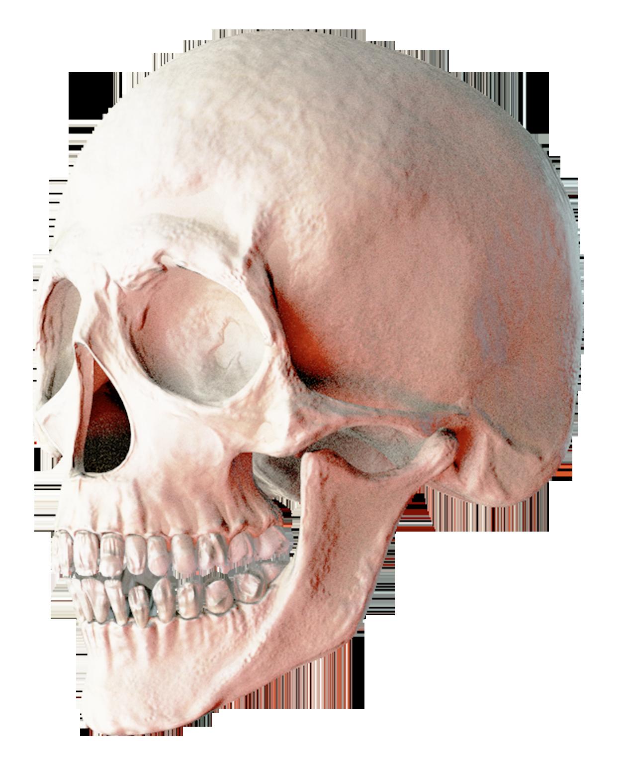 Skull Png Image Skull Png Png Images