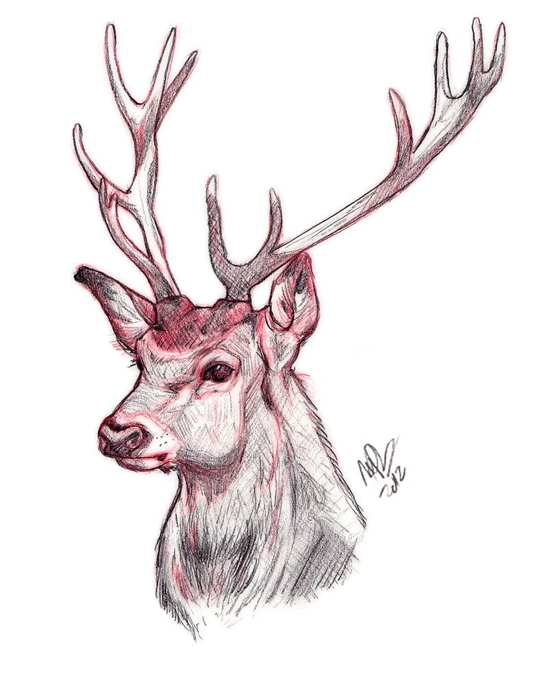deer head drawing tumblr - photo #19
