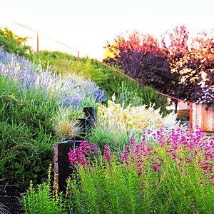 A Hillside Garden S Ingenious Design Sloped Garden Landscape Design Steep Hillside Landscaping