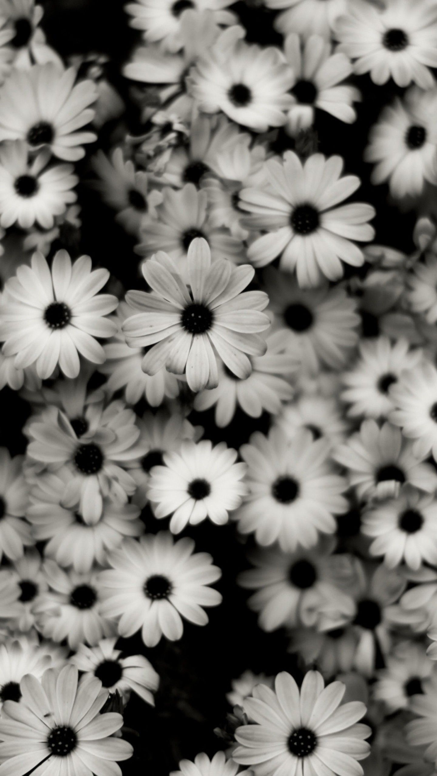 1440x2560 Preview Wallpaper Black White Flowers Grey Daisies 1440x2560 Black And White Wallpaper Iphone White Wallpaper For Iphone White Roses Wallpaper