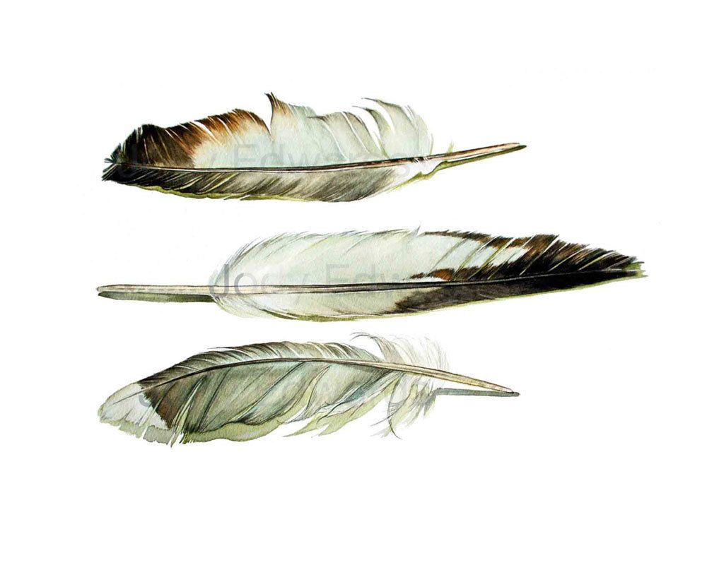 Shore Bird Feathers Archival Quality Print Based On The Original