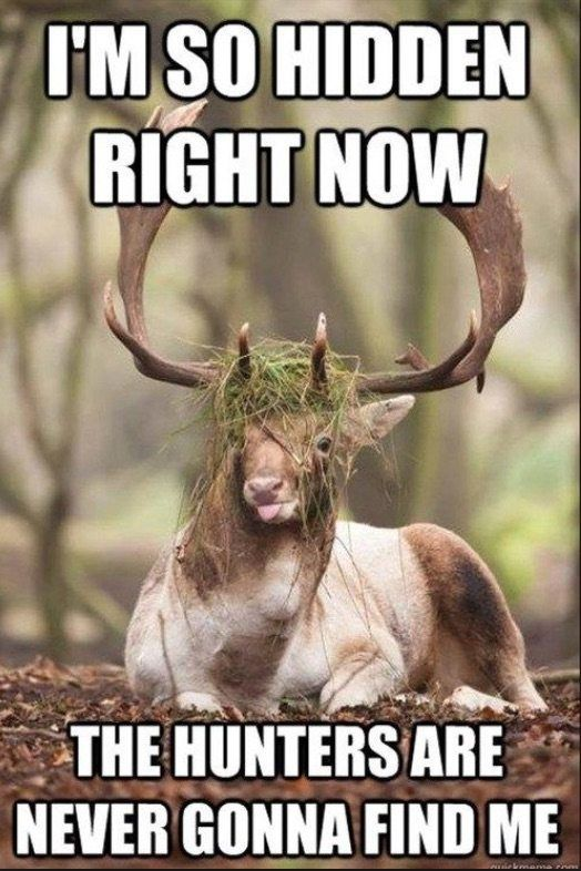 The 10 Best Hunting Memes On The Internet Funny Wild Animals Funny Animals With Captions Hunting Humor