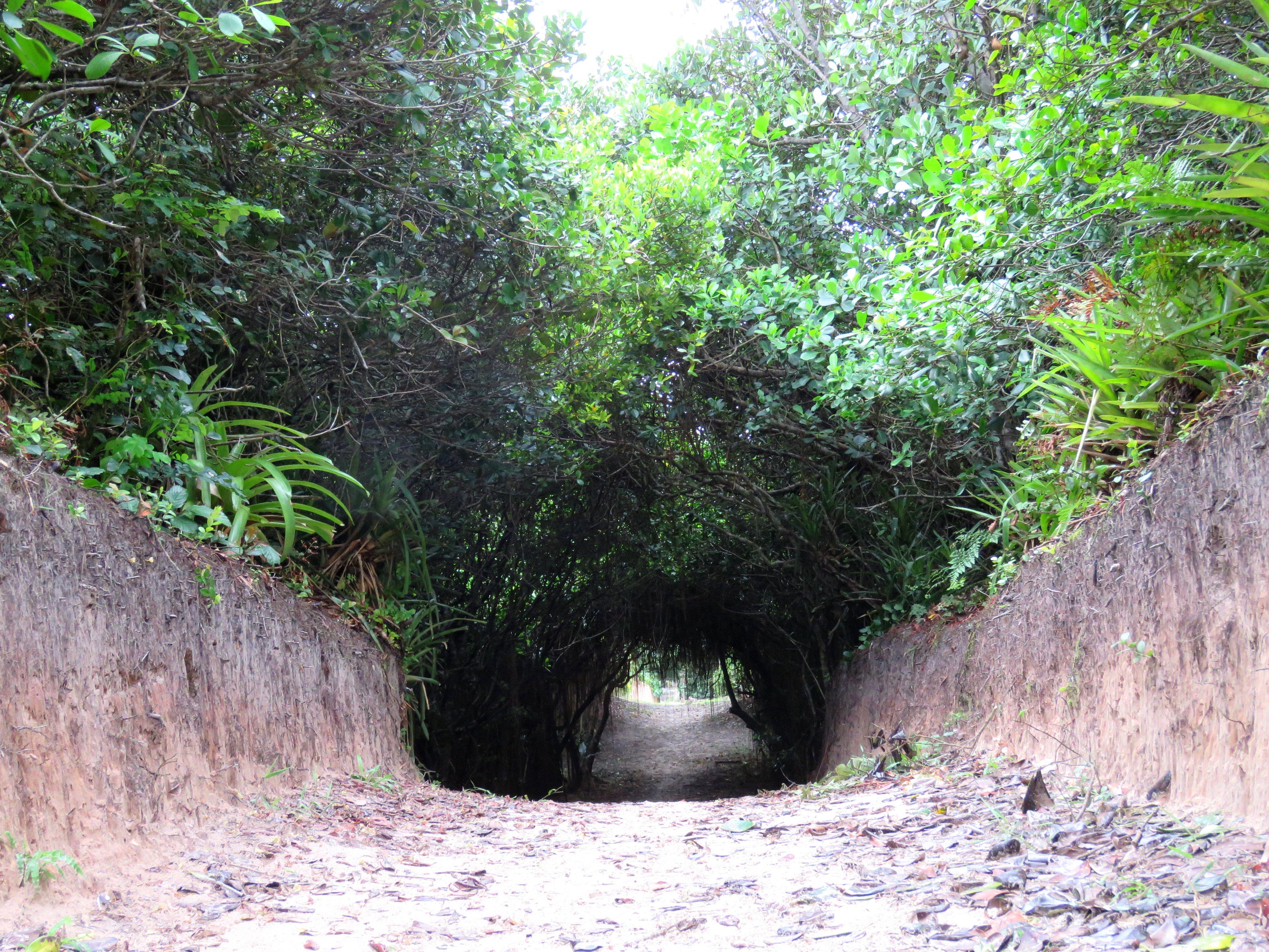 Parque Estadual da Ilha do Cardoso - SP