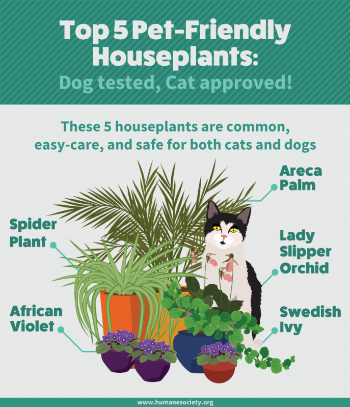 Interior Design House Plants Safe For Cats House Plants Safe For Cats Incredible Houseplants And Plants Pet Friendly Houseplants Safe For Cats Cat Safe Plants