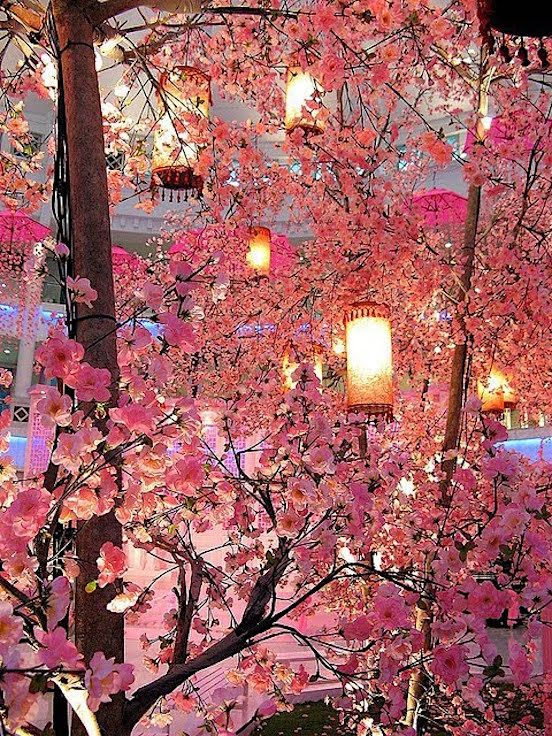 Cherry Blossom Festival Japan Onlinetravelersguide Blogspot Com Cherry Blossom Festival Blossom Trees Chinese New Year Decorations