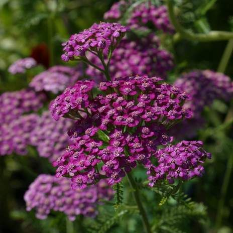 8 of the best flowering plants for a colourful garden display