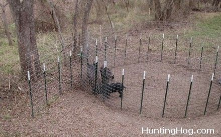 Hog Trap Door Plans likewise VE3gjBrNbQw together with 37821 together with Hogtrap as well Types Traps Feral Pigs. on hog trap door design