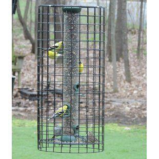 Couronne The Hummingbird Feeder | Wayfair | Bird feeders, Humming bird feeders, Suet bird feeder