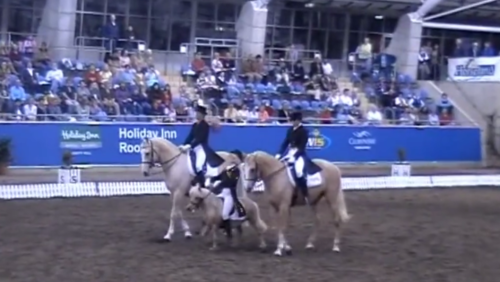 Watch this hilarious pas de trois with two palomino dressage horses and a mini! So cute! www.beginthedance.com #beginthedance #musicalfreestyle #dressagefreestyle #horsehumor #funnyhorse