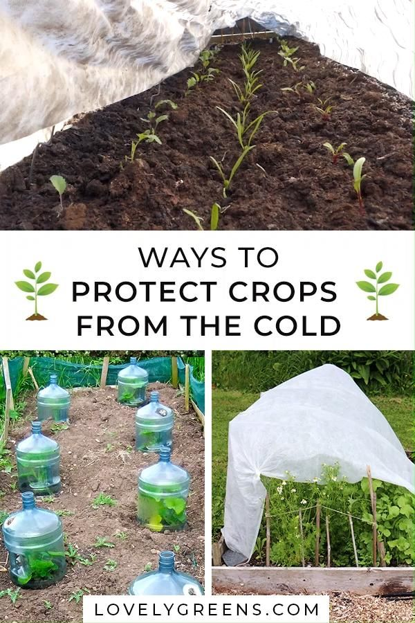 Ways to Protect Spring Crops from the Cold
