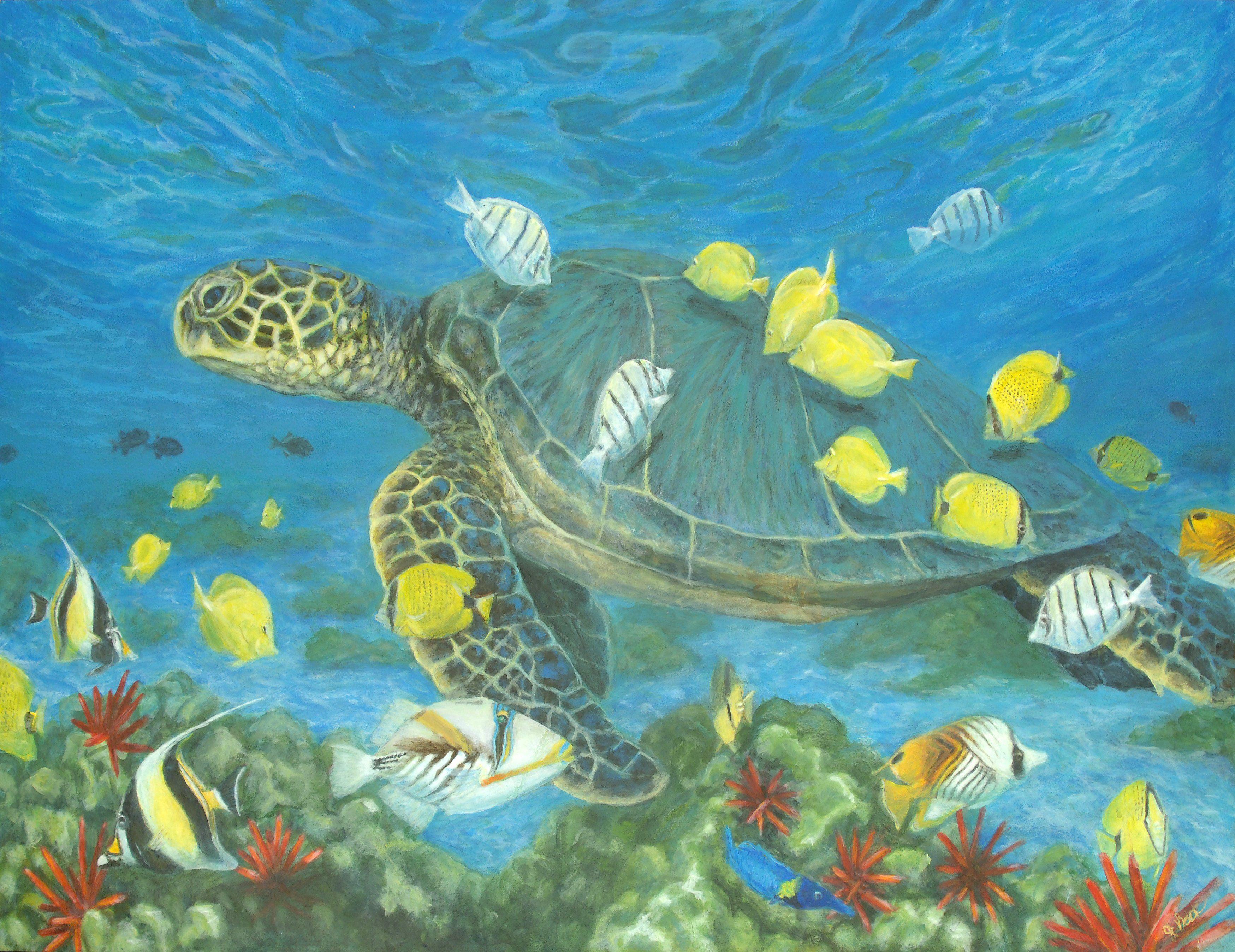 Green sea turtle with tropical fish in Hawaii Sea turtle