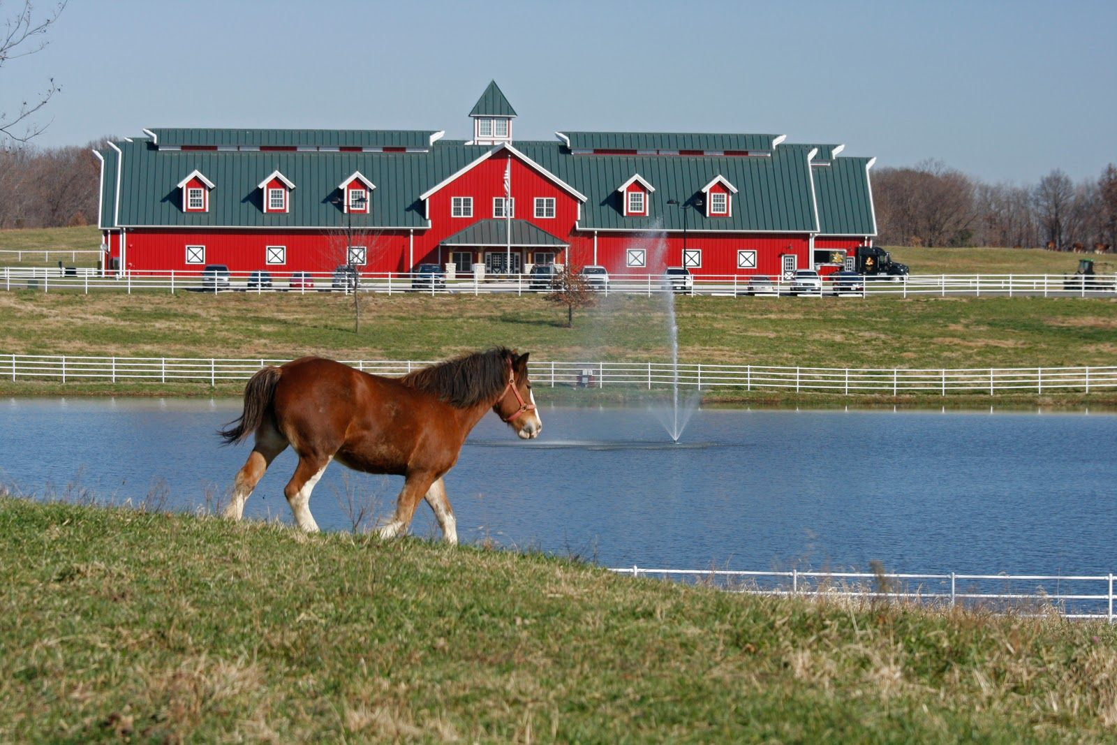 Warm Springs Ranch - Home of the Budweiser Clydesdales in Booneville, MO is home to roughly half of AB's herd of Clydesdales that numbers around 200. Open for tours April thru October. Tours last about 1.5 hrs. and are offered daily except Wednesday at 10am and 2pm. Visitors 21 and older can sample a Budweiser beer at the end of the tour (except on Sunday). Reservations are required. Call (888) 972-5933 or register online at www.warmspringsranch.com.