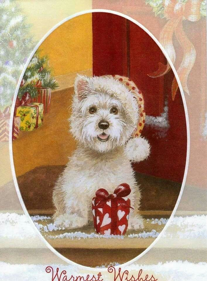Westie Christmas Card from Ireland❤❤❤ | animales/ westys ...