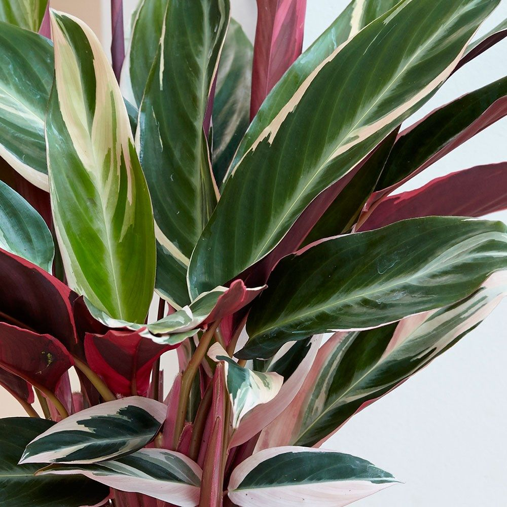 Цвет листьев водяной лилии фото настолько