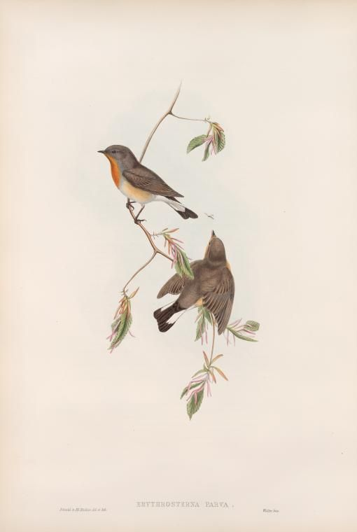 aves de Gran Bretaña