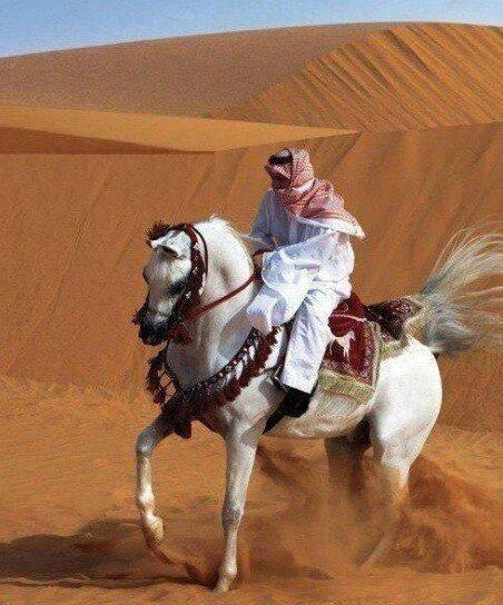 Light Grey Arabian Cresting The Dunes Beautiful Arabian Horses Horses Grey Horse