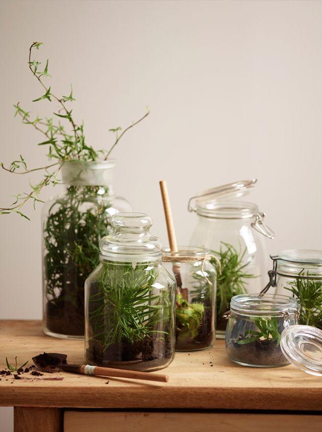 Plantas En Botes De Cristal Decoratrix Blog De Decoración Interiorismo Y Diseño Frasco De Vidrio Plantas Jardinería