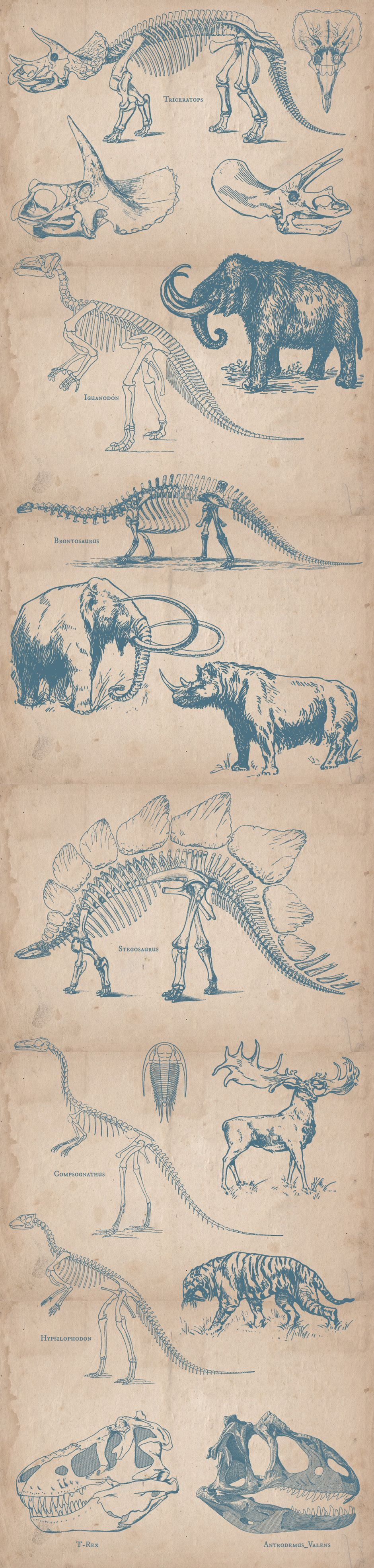 Prehistoric Animals #prehistoricanimals Carefully restored illustrations - Most of the sold vintage vector illustrations look just like the source materials – nicely weathered. But sometimes th #prehistoricanimals