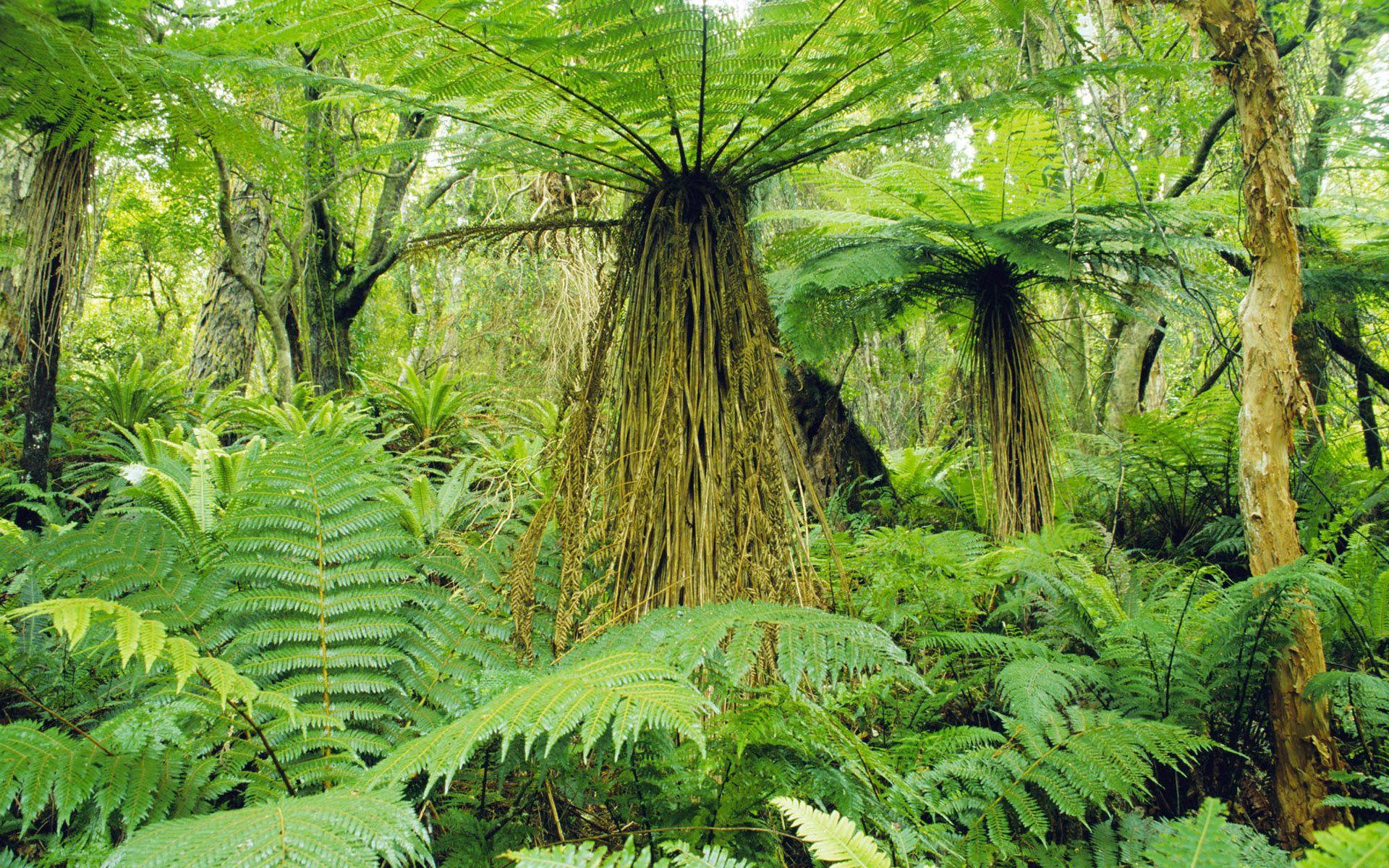 Resultado de imagen de Una bella selva tropical