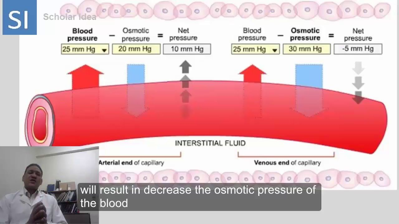 Hydrostatic Pressure Vs Oncotic Pressure Made Easy Osmotic