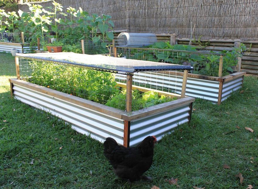 raised bed area diy building gardening build garden simple iron a deck corrugated beds