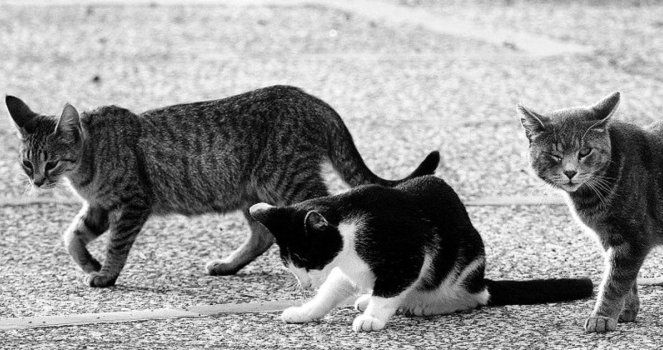 Barcelona: Save the stray cats, sterilize and feed them