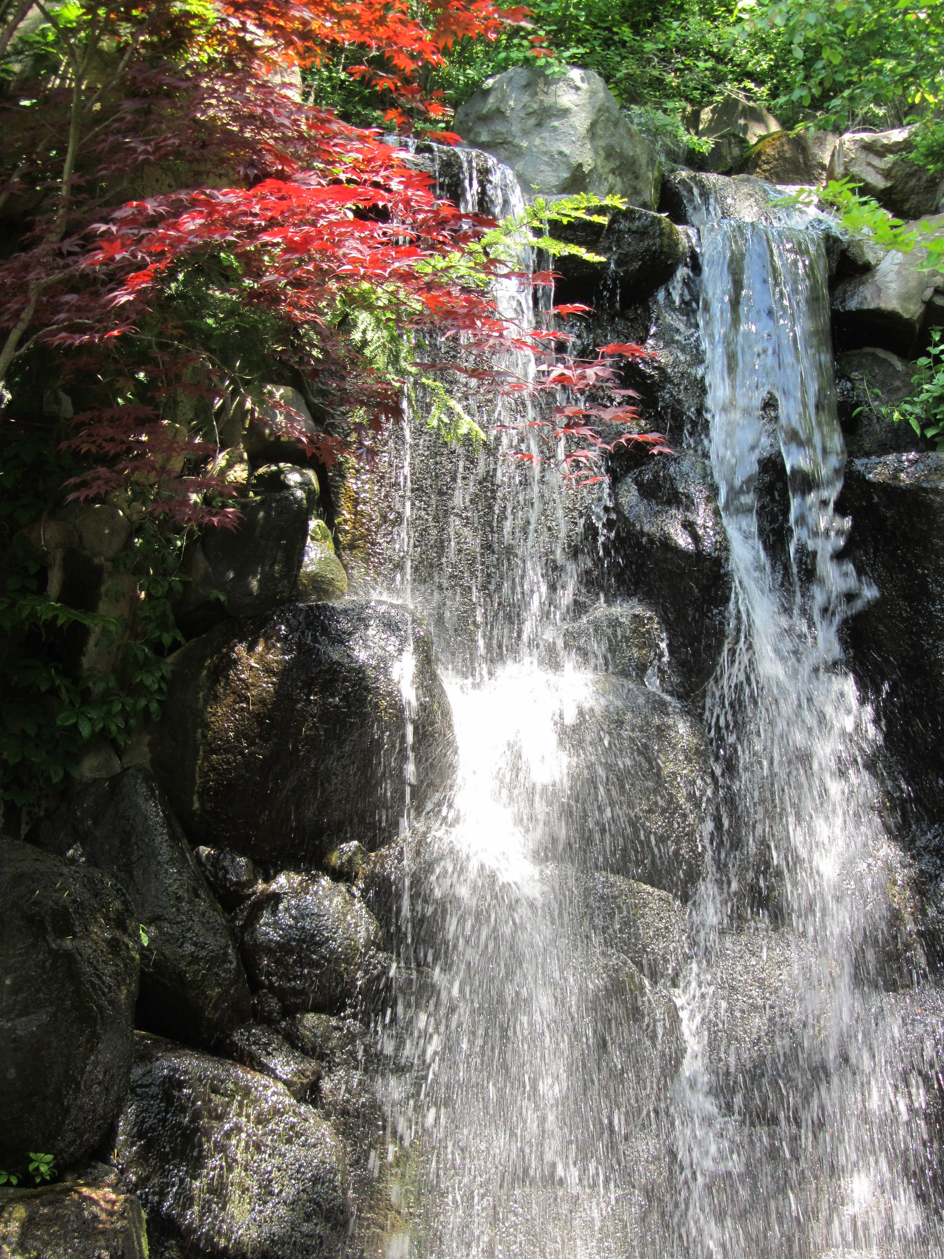 Anderson\'s Japanese Gardens, Rockford, Illinois | ~Waterfalls ...