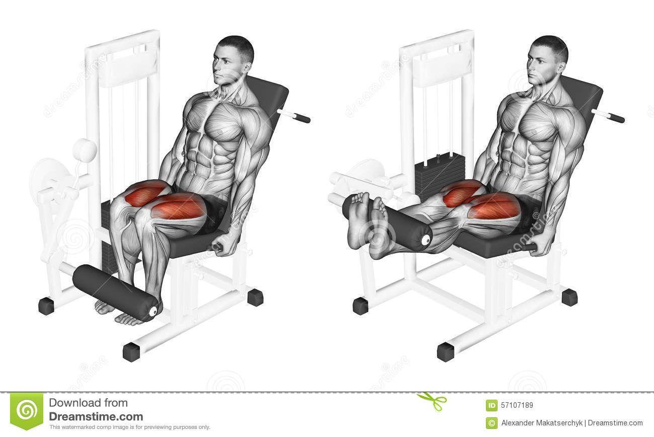 Exercising Leg Extension In The Simulator On Quadriceps