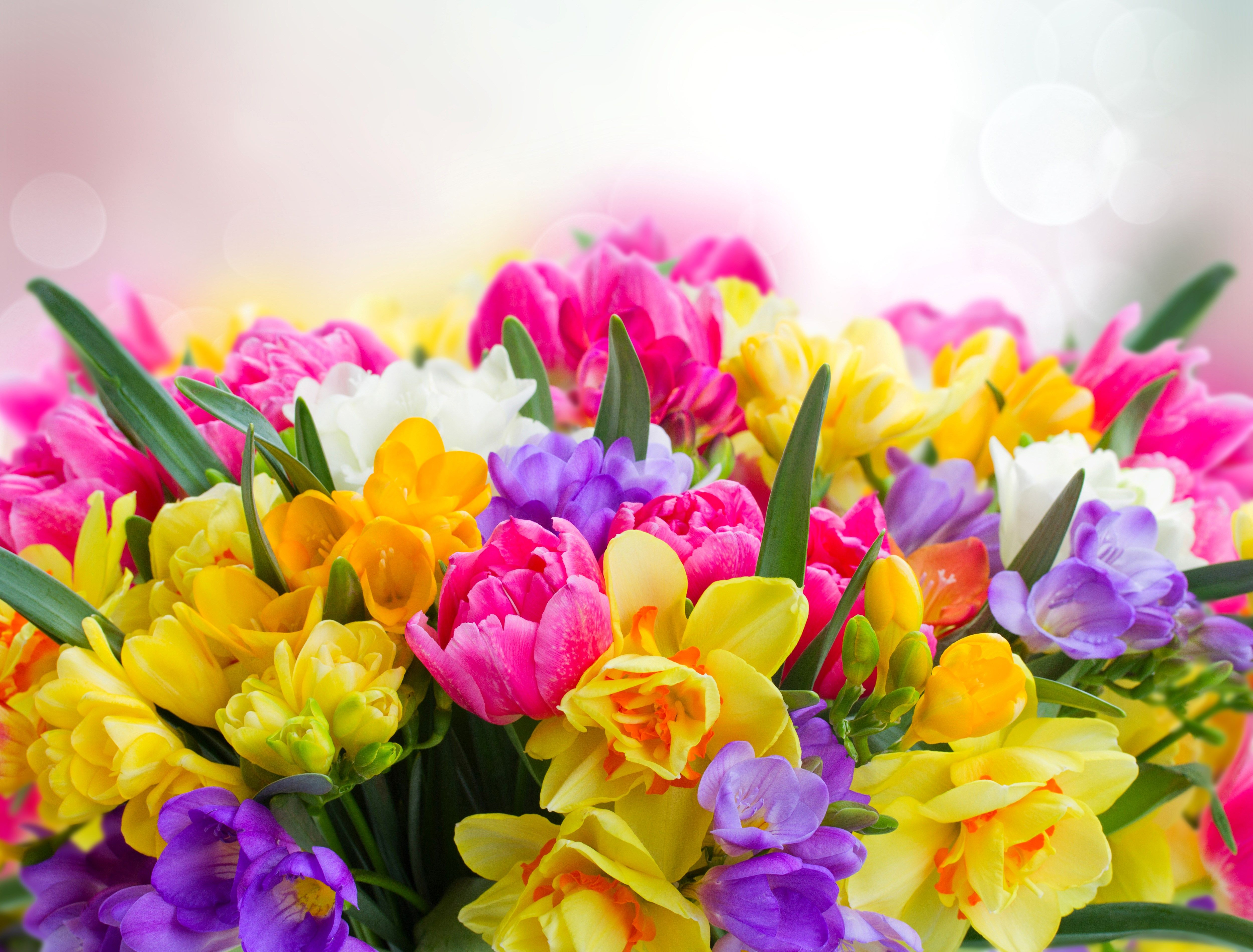 Flower Background Hd 5000x3800 Pictures Of Spring Flowers Flower Wallpaper Spring Flowers