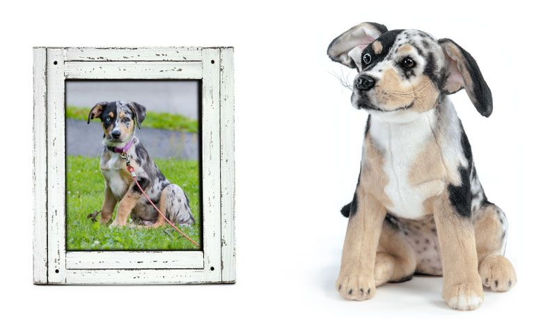 16++ Stuffed animal of your pet images