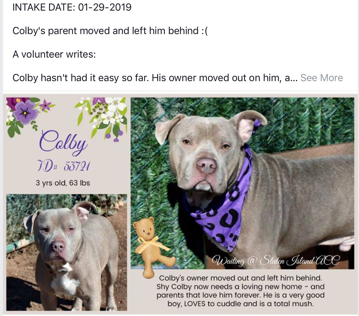 Colby Pulled By Long Island Pit Stop Rescue 02 14 19 To Die