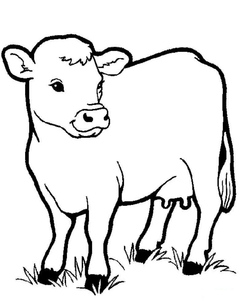 Raskraska Domashnie Zhivotnye 23 Foto Shutniki Club Cow Coloring Pages Coloring Pictures Of Animals Horse Coloring Pages