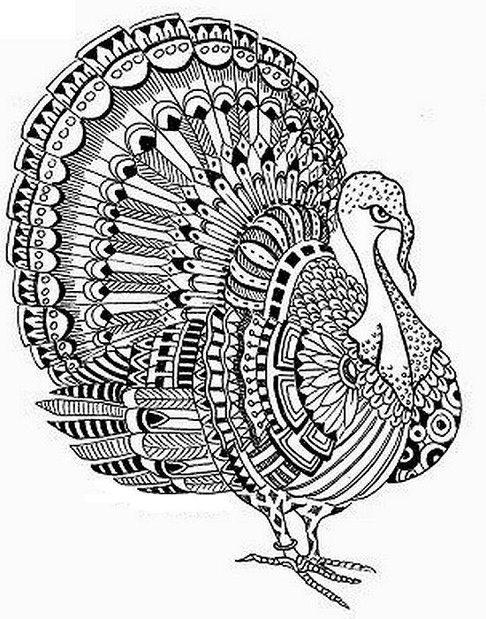 Turkey Adult Coloring Page Thanksgiving Coloring Pages