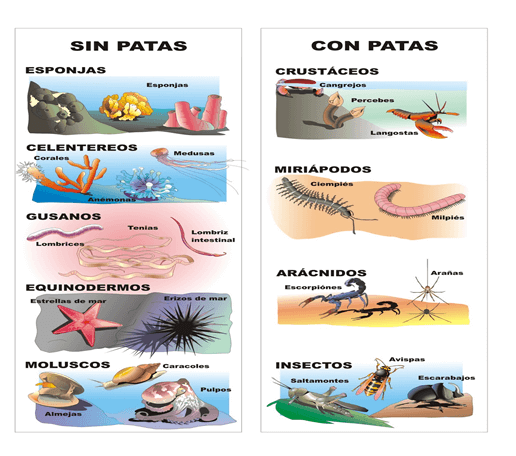 Invertebrados Vertebrados E Invertebrados Laboratorios De Ciencias Animales Invertebrados