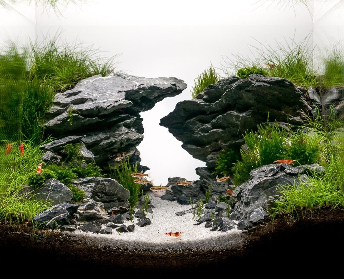 Zigzag gorge by louis nincsics hac 2014 entry very for Planted tank fish