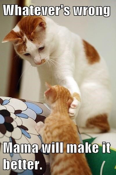 That S What Mama Is For Heart Warming Funny Cats Dogs Cute