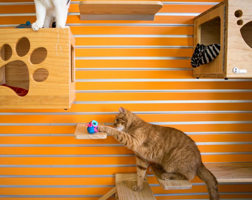 A Healthier Way to Feed Your Cat Hide Its Meals Cats