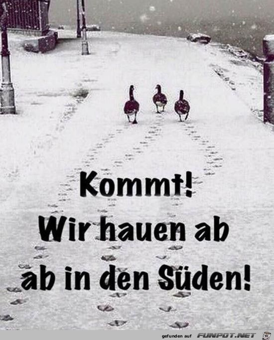 Wir Hauen Ab Jpg Funny Quotes Humor Funny