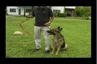 How To Teach Your Dog To Heel In A Day My Dog Dogs Dog