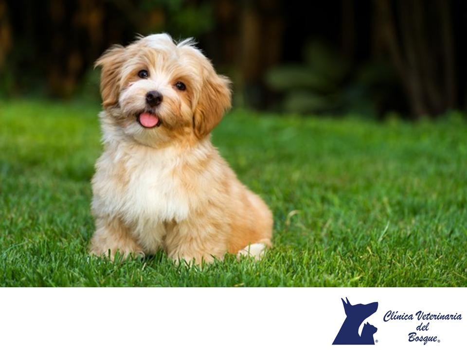 Perros Pequenos Clinica Veterinaria Del Bosque Entre Las