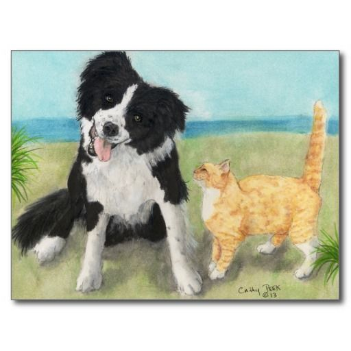 Pin By Balo Oli On Thank You Post Cards Border Collie Dogs Collie
