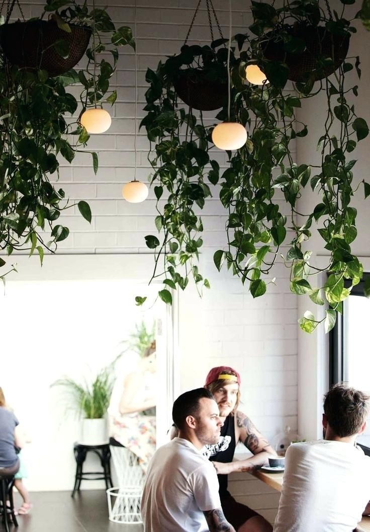how to hang plants from ceiling hanging plants hanging plants indoor garden ideas hang plants from ceiling without holes #hangingplantsindoor
