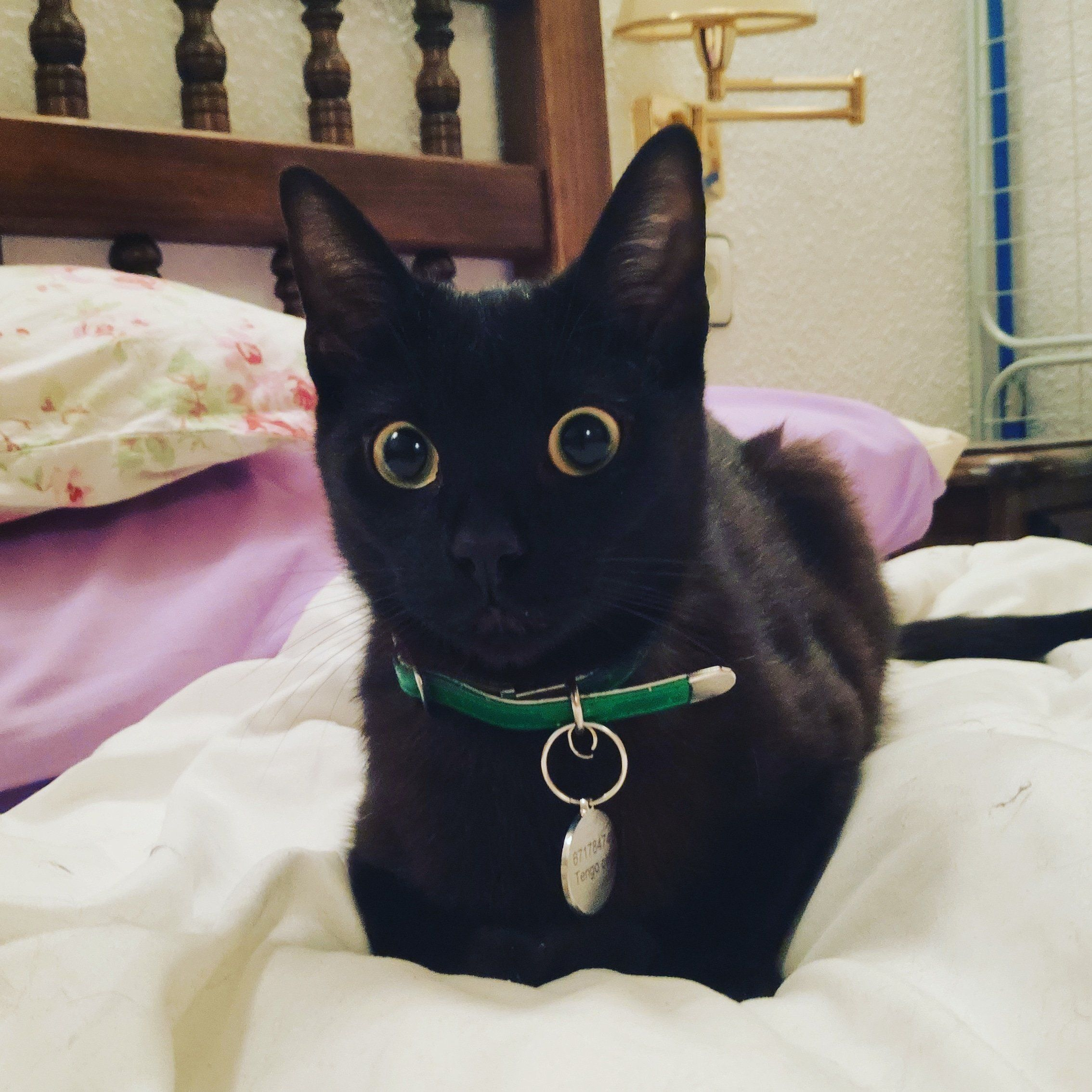 One Of My Rescues Salem Satan Despite The Name Pure Love Cats Catscatscats Catsofgram Catsdaily Catslove Cute Puppies And Kittens Cute Cats Cute Dogs
