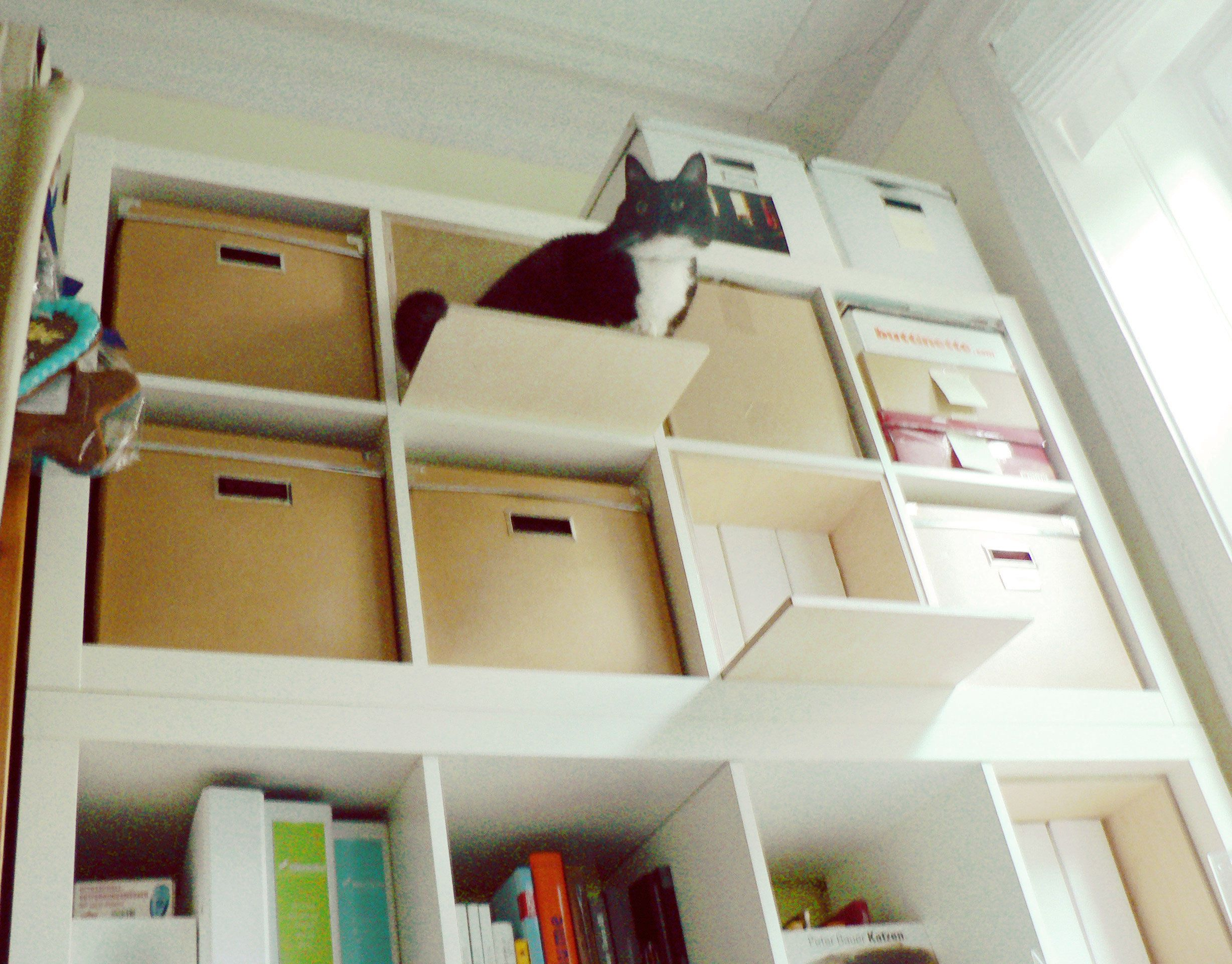 ikea expedit kallax m bel f r katzen miezekatze. Black Bedroom Furniture Sets. Home Design Ideas