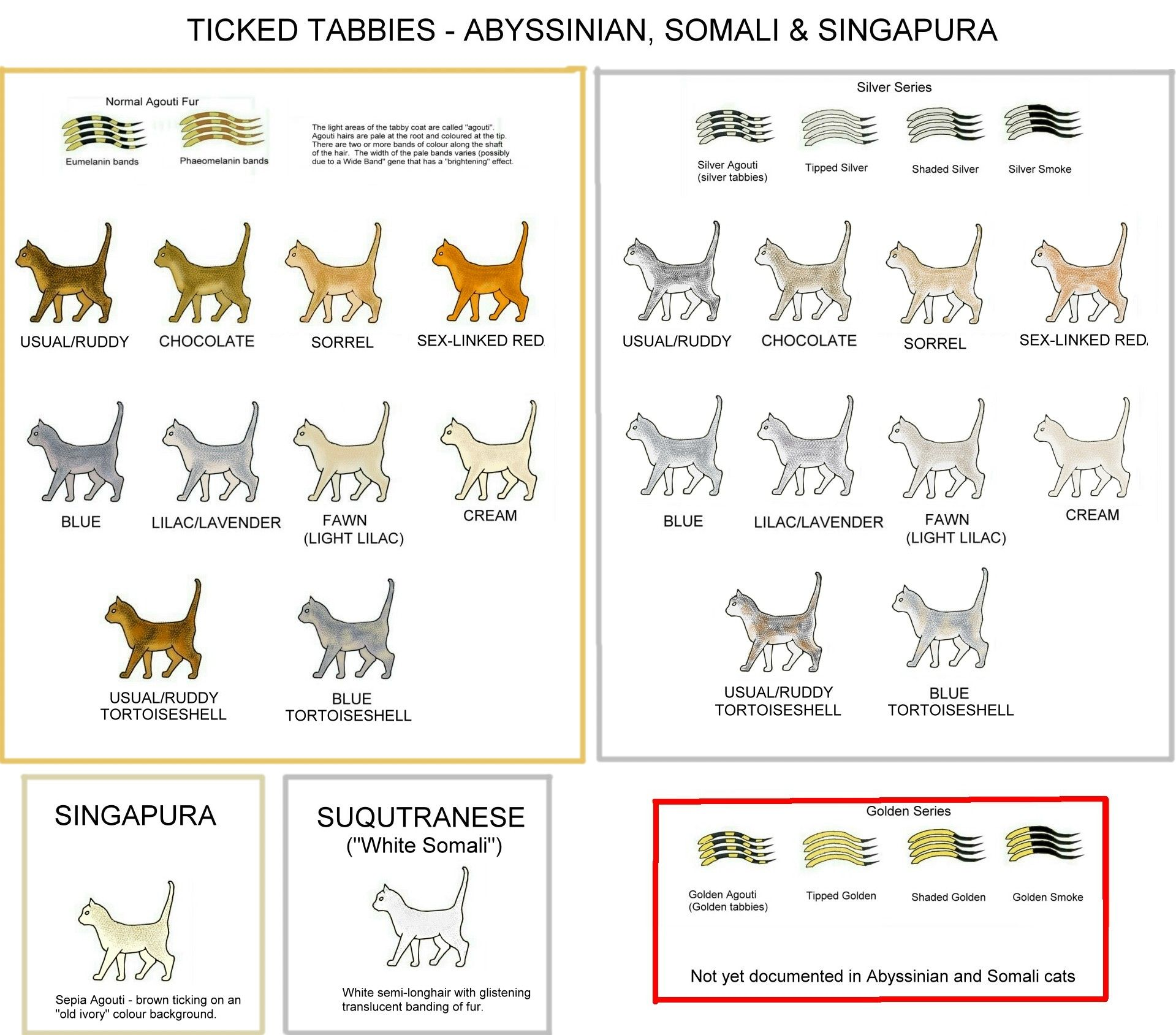 hight resolution of colour and pattern charts for every cat color in existence some info about the genetics behind it too