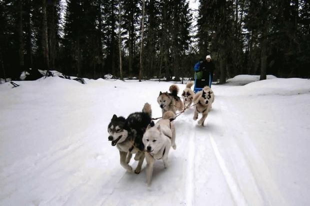 Spring dogsledding in #Montana. Fun article from Second Act.  #boomer #travel