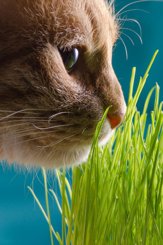 Cat Grass Mix Seeds Cat Grass Cats Grass