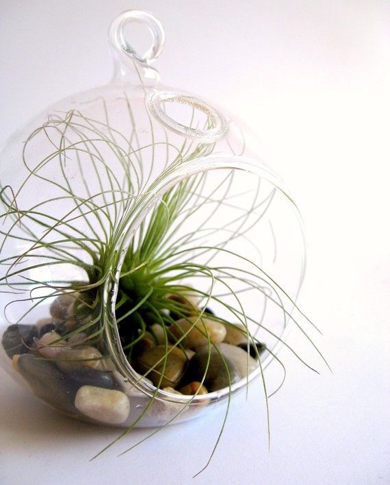 Glass Plant Terrarium Products Pinterest Terraria And Products