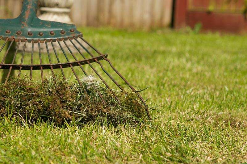 3 simple steps to a thicker lusher lawn lush lawn lawn