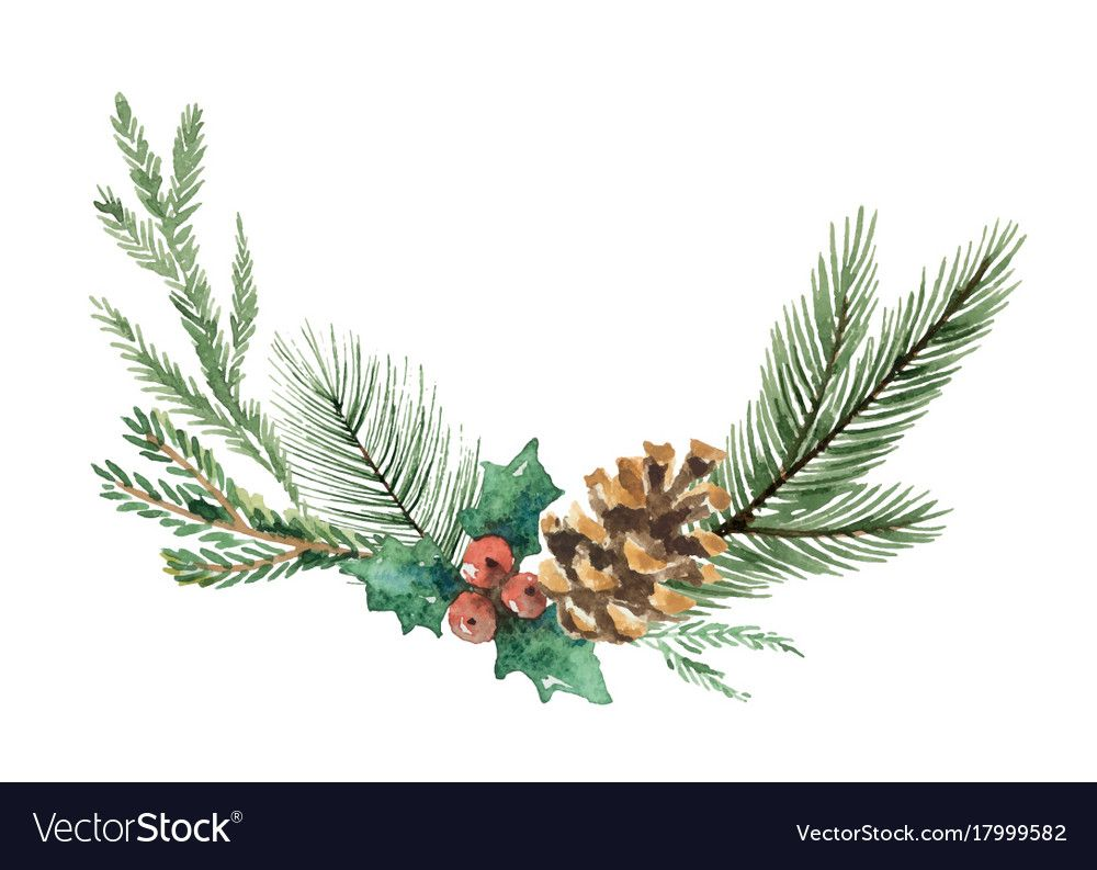 Watercolor Christmas Wreath With Fir Vector Image On Vectorstock Christmas Watercolor Watercolor Christmas Cards Wreath Drawing